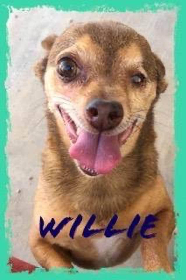 adoptable-willie