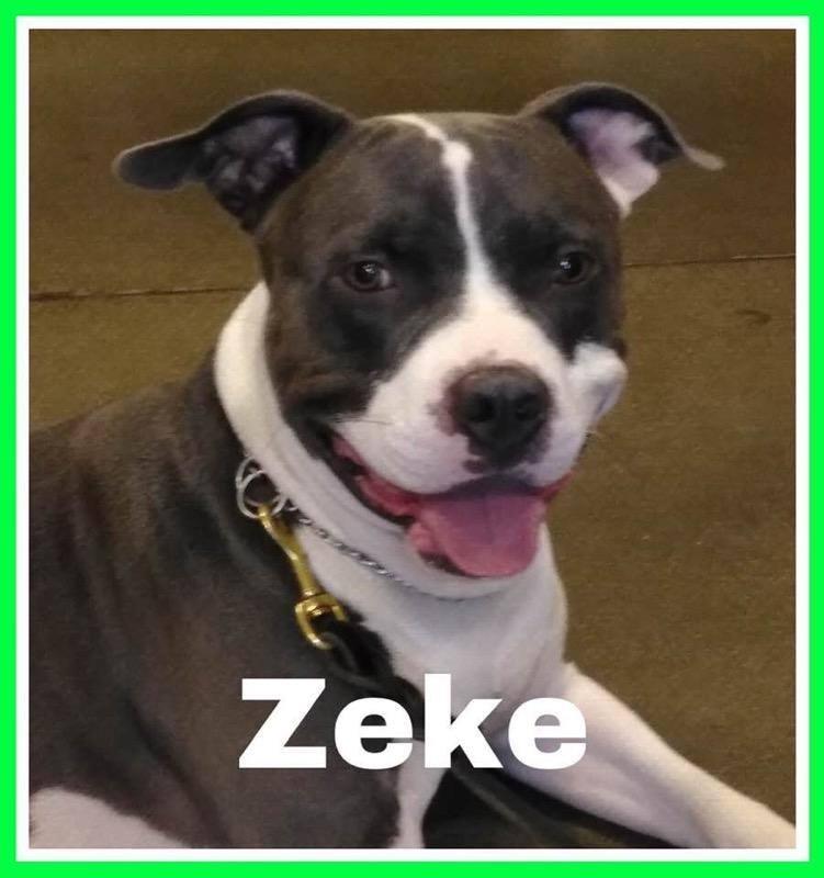 adoptable-zeke