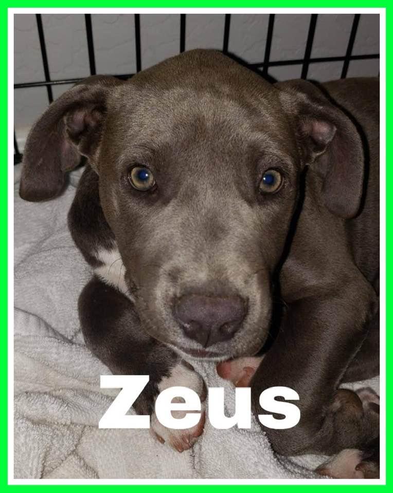 adoptable-zeus
